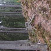 Ape minerale Băile Harghita - Hargitafürdői borvizek